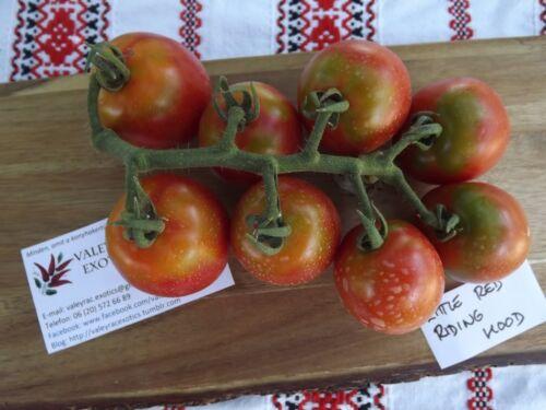 Seeds Saatgut Tomato 10+ Samen Gemüsesamen Rotkäppchen Tomate