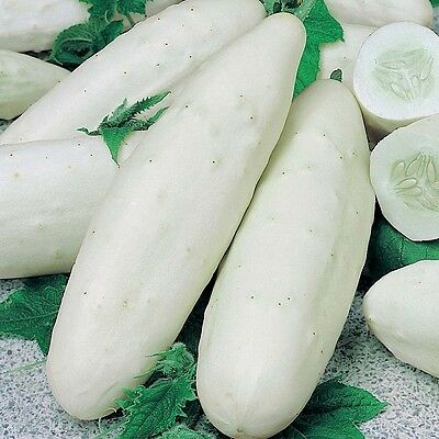 Cucumber Long White x30 Bulk seeds Bonus see inside