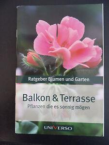 Balkon Und Terrasse Pflanzen Die Es Sonnig Mogen Ratgeber Fur Blumen