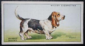 Basset Hound    1930039s Original Vintage Illustrated Card - Melbourne, Derbyshire, United Kingdom - Basset Hound    1930039s Original Vintage Illustrated Card - Melbourne, Derbyshire, United Kingdom