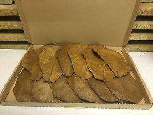 10-1-Seemandelbaumblaetter-20-25cm-natuerlich-gereift-getrocknet-VERSANDKOSTENFREI