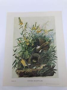 John-James-Audubon-Folio-Plate-114-Eastern-Meadowlark-Limited-750