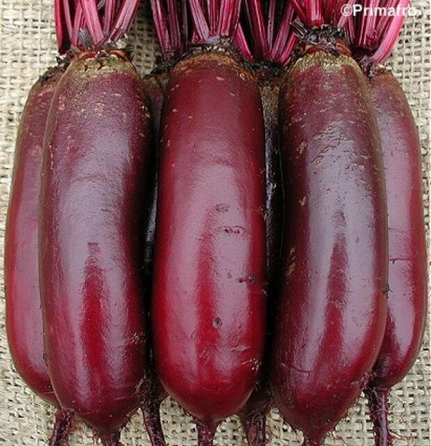 ORGANIC VEGETABLE  BEETROOT CYLINDRA  400 FINEST SEEDS