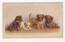 Ant. Trade Card - Standard Clothing Co. Portland, ME - 4 Puppies - Men's Suits