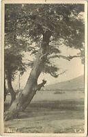 Argentina Postcard Rio Mitre Lago Argentino