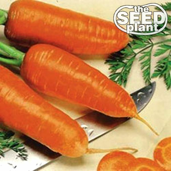 500 SEEDS NON-GMO Imperator Carrot Seeds