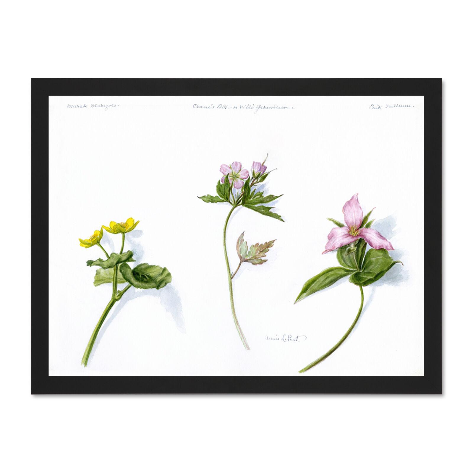 MariGold Geranium Trillium Large Framed Art Print Wall Poster