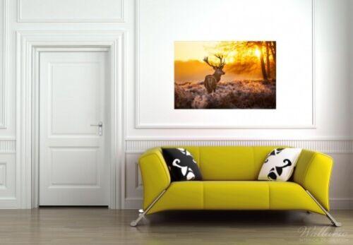 Wallario Poster in 61 x 91,5 cm Rothirsch Abend Wald Wild Tiere Wiese Geweih