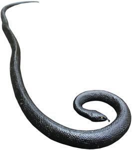 "COTOSEY 53/"" Rubber Lifelike Snakes Wild Life Toys"