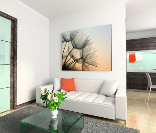 Leinwandbild 120x80cm auf Keilrahmen Löwenzahn,Pusteblume,Pflanze,abends