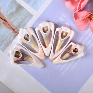 5Pcs-natural-beautiful-top-rare-real-sea-shell-conch-aquar-FN