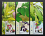 SJ-Malaysia-Medicinal-Plants-IV-2018-Fruits-Food-Flower-stamp-color-MNH thumbnail 1