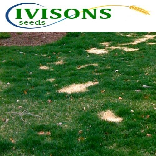 10 Kg Ivisons Fast Growing Rapid Lawn Recovery Grass Seed Quick Repair Pets dogs
