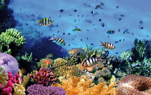 papier satiné Affiche poster Aquarium réf A28-3 dimensions