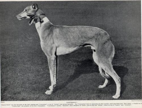 GREYHOUND NAMED DOG OLD ORIGINAL 1934 DOG PRINT