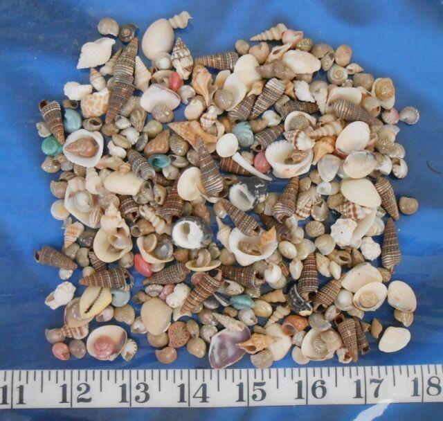 "~ Seashell Mix ~ Natural Shells ~ 3""x5"" Bag ~ Shellcraft ~ Sailor's Valentines ~"