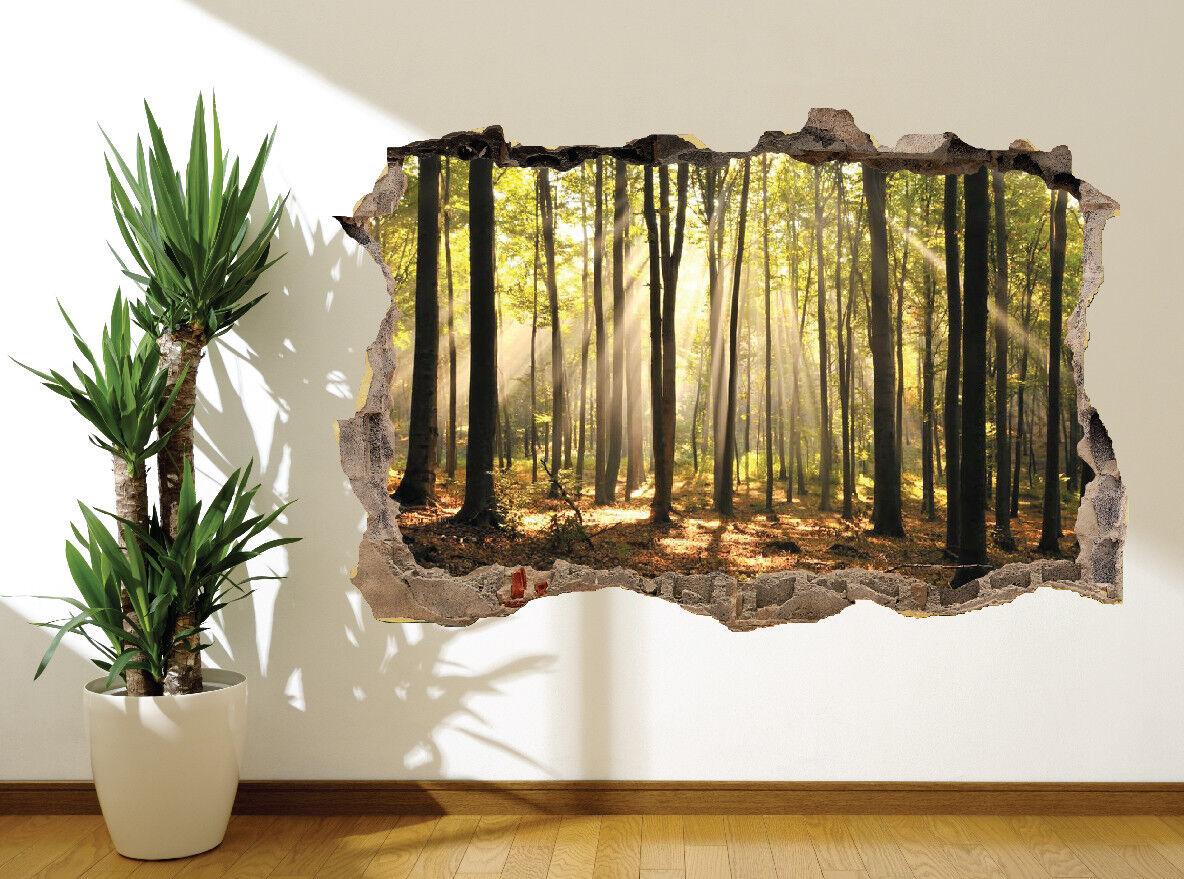 Superbe Forêt avec Soleil en Ressort Autocollant Autocollant Autocollant Mural (11282679) | Réduction  c35c35
