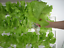 thumbnail 3 - Vertical Herb Flower Seedling Fresh Lettuce Organic Growing Pipe Kit 108 Plant