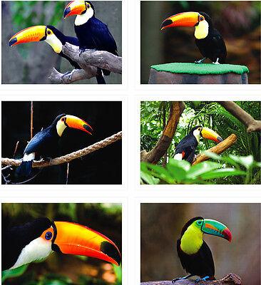 Lots Toucan Postcards Bulk Bird Animal Post Card  6PCS/SET