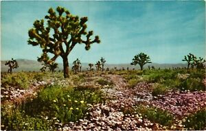 Vintage Postcard - Desert Scene With Trees And Flowers Un-Posted #3980