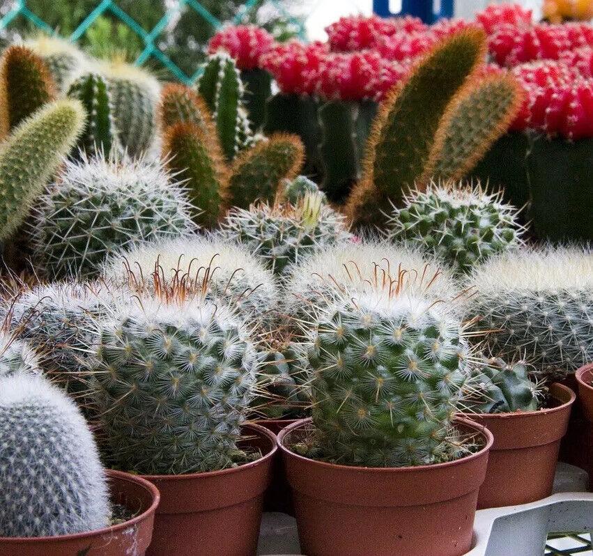 1 Litre of Premium Cactus Potting Soil / Growing Discs - For Cacti & Succulents