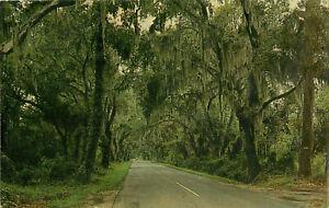 Postcard-Road-To-Summervill-SC