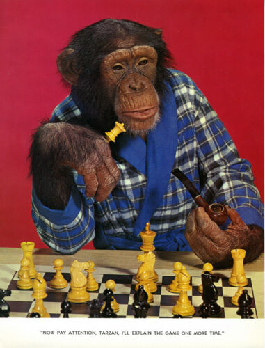 1 Vintage Art Photo Page from Chimp Chat Book 1960 Monkey Chess Player Board