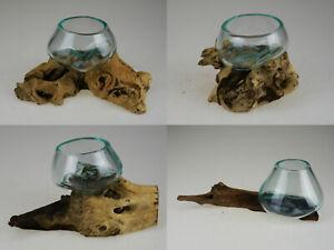 Details zu Holzwurzel Kaffeebaum Vase Teak Unikat Glas Design Wurzel  Treibholz Deko 24-27
