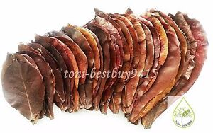 "Pet Supplies Rational 50 Pcs 9"" A+ Catappa Ketapang Indian Almond Leaves Shrimp Betta Discus Cichlid Cleaning & Maintenance"