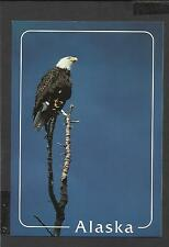 Colour Postcard Portrait  Bald Eagle top of cottonwood tree Alaska  unposted