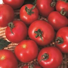 Kings Seeds - Tomato Moneymaker - 75 Seeds