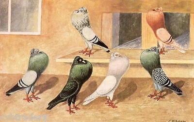 Italian Owls Pigeons  Refrigerator Magnet Tool Box