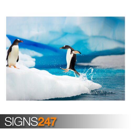 3489 GENTOO PENGUINS ANTARCTICA Animal Poster Poster Print Art A1 A2 A3 A4