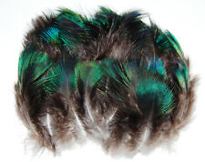 "100 Pcs PEACOCK PLUMAGE; NATURAL BLACK Feathers 2-5"" Craft/Art/Dance/Bridal/Hats"