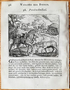 Marcus-Gerards-Fabels-Animals-Horse-meets-Donkey-1617