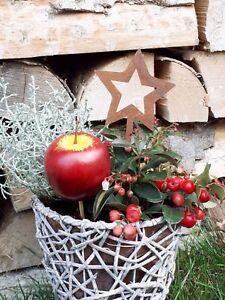 Edelrost Stern Ministecker Dekoration Garten Terrasse Topfstecker