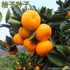 50*  Edible Fruit Mandarin Citrus Orange Bonsai Tree Seeds Small Tree Seed New