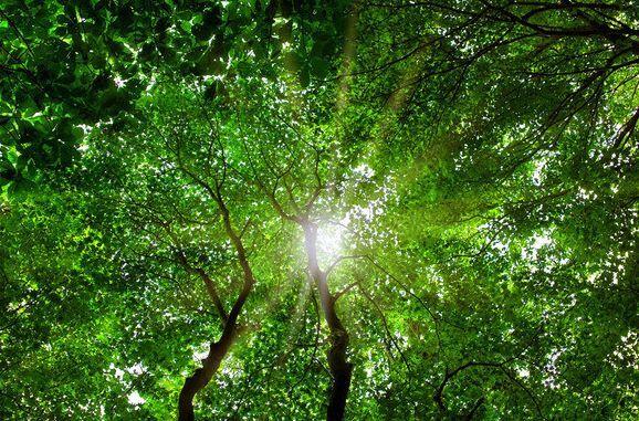 3D Bäume, Sonnenschein 498 Fototapeten Wandbild Fototapete BildTapete Familie DE