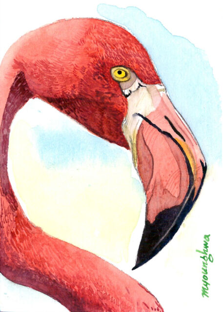 "ACEO Limited Edition 2.5""x3.5""- Close up flamingo, Art print"