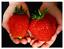 500-PCS-Seeds-Giant-Strawberry-Organic-Fruit-Plants-Vegetables-Bonsai-Garden-New thumbnail 1