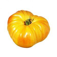 25 Graines de Tomate Ananas Méthode BIO seeds plantes légumes ancien potager