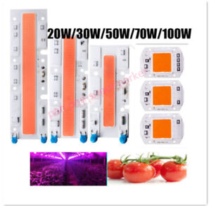 Full Spectrum LED Grows Light 50W LED COB Chip For Hydroponic Greenhouse Plant