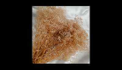 PRESERVED NATURAL BABYS BREATH STARDUST DRIED FLORAL FLOWER FOLIAGE FILLER
