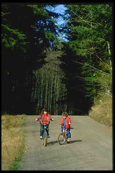 023023 Children Cycling In Forest A4 Photo Print