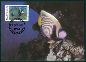 DéTerminé Maldives Mk 1986 Faune Poissons Fish Empereur Poisson Angelfish Maximum Carte Mc En25-afficher Le Titre D'origine