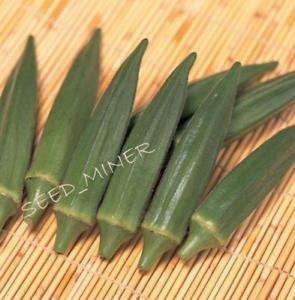 OKRA, Jambalaya Creole, 20 Premium Vegetable Seed, Organic Heirloom NON-GMO, USA