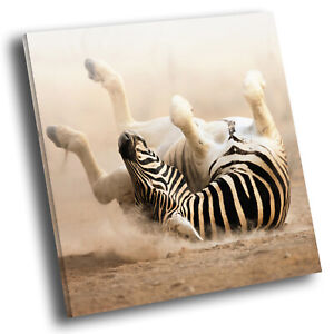 Square-Animal-Photo-Canvas-Small-Wall-Art-Picture-Prints-Brown-Black-White-Zebra