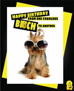 Drôle de Carte D/'anniversaire Animaux Blague Coquine Humour Chat Crazy Âne Amis C336