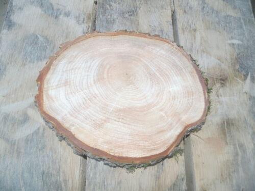30x 3 cm Holzscheibe Baumscheibe Erle