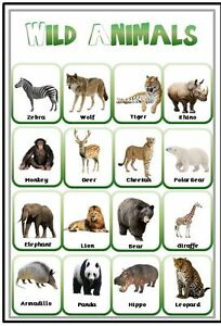 wild animals a4 laminated poster eyfs sen toddler first
